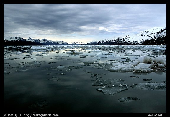 Ice-choked waters, West arm. Glacier Bay National Park (color)