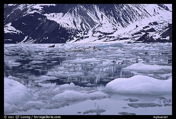 Ice-chocked waters in John Hopkins inlet. Glacier Bay National Park (color)