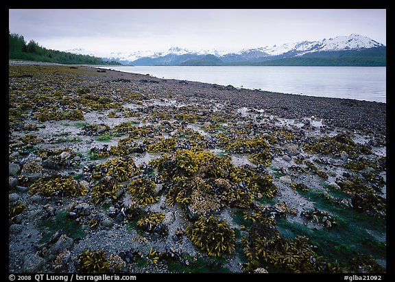 Tidal flats, Muir inlet. Glacier Bay National Park (color)