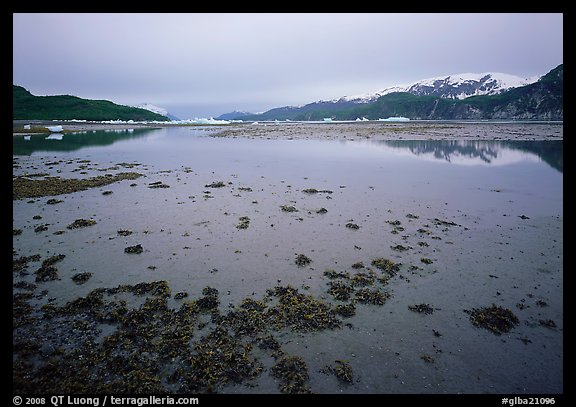 Mud flats near Mc Bride glacier, Muir inlet. Glacier Bay National Park (color)