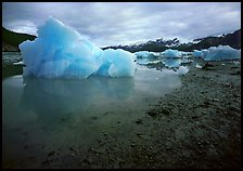 Blue icebergs beached near Mc Bride Glacier. Glacier Bay National Park, Alaska, USA.