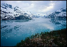 Dwarf plants and John Hopkins inlet. Glacier Bay National Park ( color)
