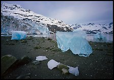 Translucent icebergs at the base of Lamplugh Glacier, morning. Glacier Bay National Park, Alaska, USA.