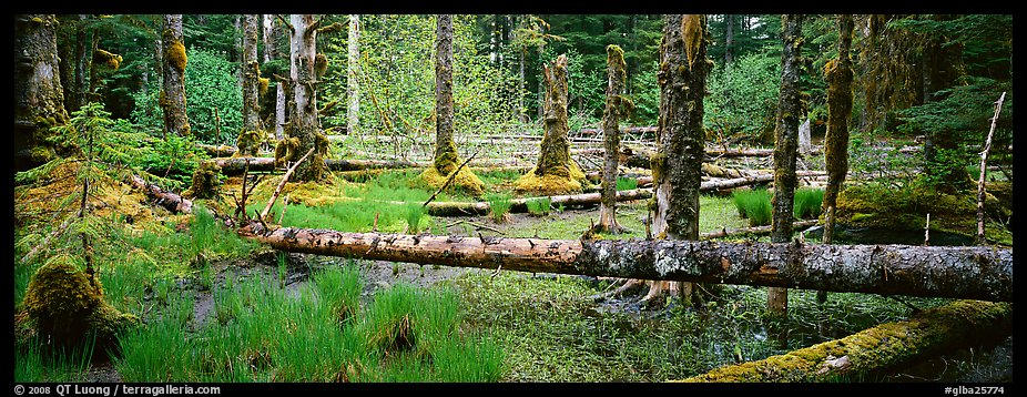 Temperate rainforest scenery. Glacier Bay National Park (color)