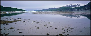 Tidal flat with icebergs in the distance. Glacier Bay National Park (Panoramic color)
