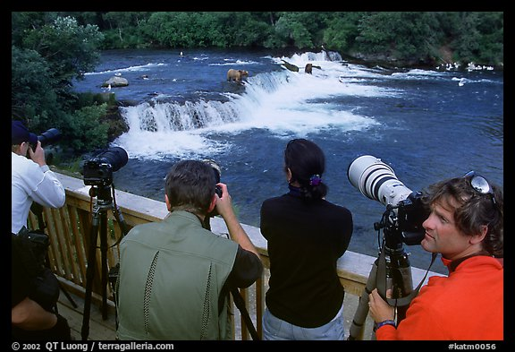 Photographers on observation platform and Brooks falls with bears. Katmai National Park (color)