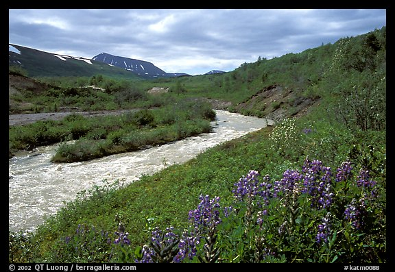 Wildflowers and Lethe river at the edge of the Valley of Ten Thousand smokes. Katmai National Park (color)