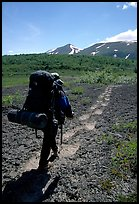 Backpacker follow bear tracks, Valley of Ten Thousand smokes. Katmai National Park, Alaska