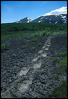 Big bear tracks in the ash, Valley of Ten Thousand smokes. Katmai National Park ( color)