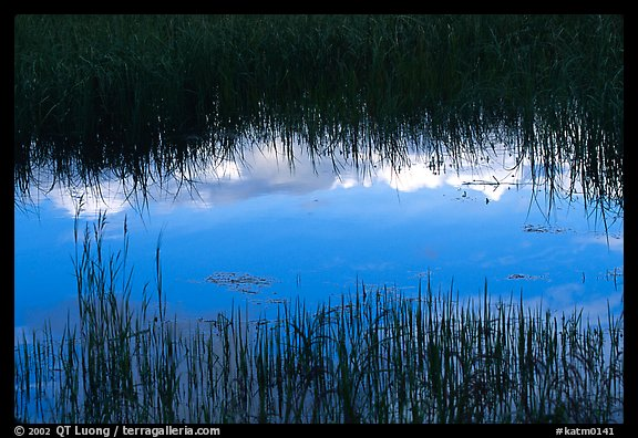 Reflections in pond near Brooks camp. Katmai National Park (color)