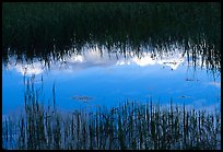 Reflections in pond near Brooks camp. Katmai National Park ( color)