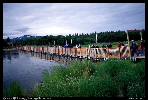 Crossing a bridge on the way to Brooks falls. Katmai National Park (color)