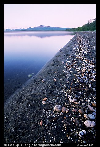 Bear tracks on the shore of Naknek lake. Katmai National Park (color)