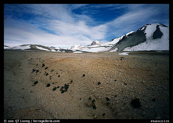 Rare plants growing out of the ash of Valley of Ten Thousand smokes. Katmai National Park (color)