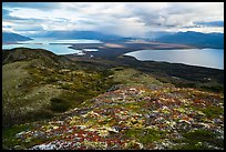 Naknek Lake and Brooks Lake from Dumpling mountain in autum. Katmai National Park ( color)