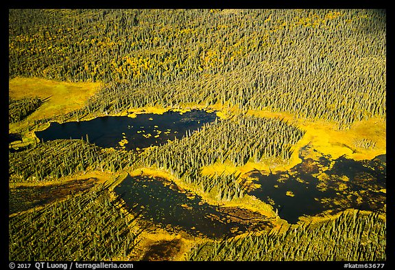 Aerial View of forest and ponds. Katmai National Park (color)