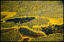 Aerial View of forest and ponds. Katmai National Park ( color)