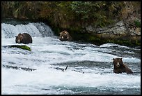 Bears in Brooks River below Brooks Falls. Katmai National Park ( color)