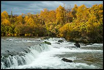 Brooks Falls and bears fishing in autumn. Katmai National Park ( color)