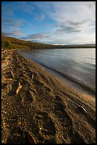 Naknek Lake shore with huge bear footprints. Katmai National Park ( color)
