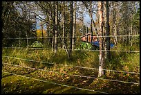 Brooks Camp campground surrounded with electric fence. Katmai National Park ( color)