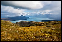 Autum colors on tundra above Naknek Lake. Katmai National Park ( color)