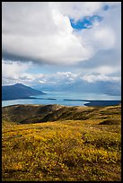 Tundra in fall colors above Naknek Lake. Katmai National Park ( color)