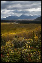 Dappled light over autumn tundra and mountains. Katmai National Park ( color)