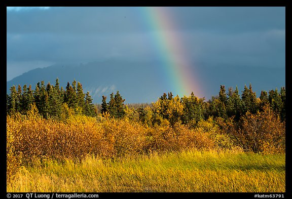 Grasses and rainbow, Brooks Camp. Katmai National Park (color)