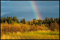 Grasses and rainbow, Brooks Camp. Katmai National Park ( color)