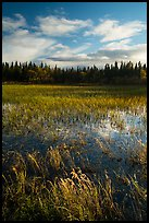 Grasses and pond, Brooks Camp. Katmai National Park ( color)