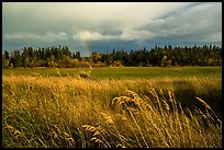 Grasses, meadow, and rainbow. Katmai National Park ( color)