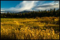 Grasses and mountain in autumn. Katmai National Park ( color)