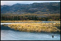 Bear in Brooks River and Dumpling Mountain. Katmai National Park ( color)
