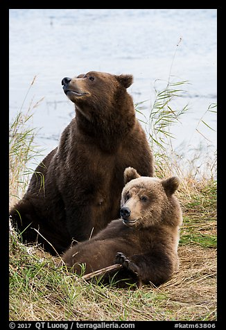 Mother and bear cub. Katmai National Park (color)