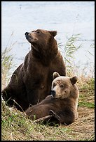 Mother and bear cub. Katmai National Park ( color)