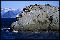 Rock with cormorant and sea lions in Aialik Bay. Kenai Fjords National Park, Alaska, USA. (color)
