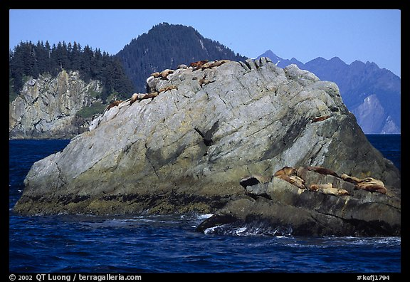 Rock with sea lions in Aialik Bay. Kenai Fjords National Park (color)