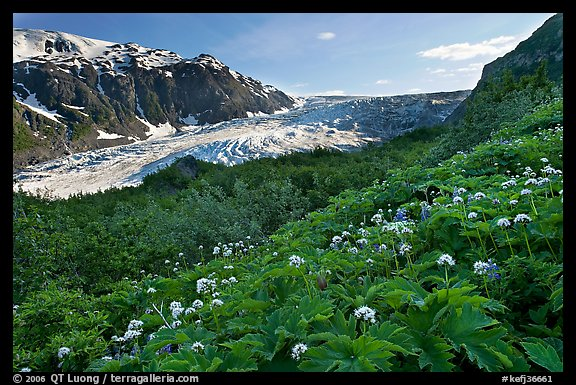 Wildflowers and Exit Glacier, late afternoon. Kenai Fjords National Park (color)
