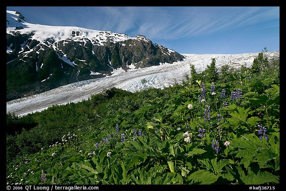 Wildflowers at Marmot Meadows, and Exit Glacier. Kenai Fjords National Park (color)
