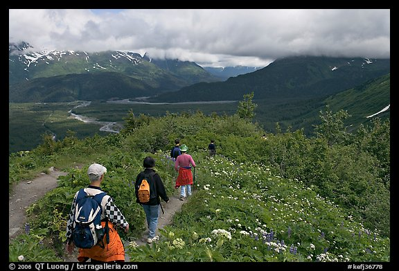 Hikers surrounded by wildflowers on Harding Icefield trail. Kenai Fjords National Park (color)