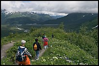 Hikers surrounded by wildflowers on Harding Icefield trail. Kenai Fjords National Park, Alaska, USA.