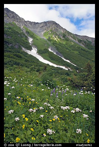 Hills and verdant alpine meadows, seen from Harding Icefield trail. Kenai Fjords National Park (color)