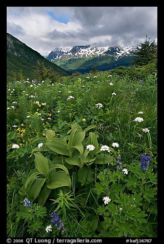Marmot Meadows and Resurection Mountains. Kenai Fjords National Park (color)