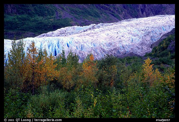 Trees and exit glacier, fall. Kenai Fjords National Park (color)