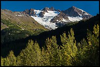 Trees in autumn and glaciers on Phoenix Peak. Kenai Fjords National Park ( color)