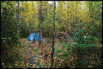 Campground. Kenai Fjords National Park ( color)