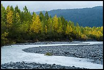 Stream and trees in fall foliage, Exit Glacier outwash plain. Kenai Fjords National Park ( color)