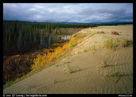 The edge of the Great Sand Dunes with boreal forest below. Kobuk Valley National Park (color)