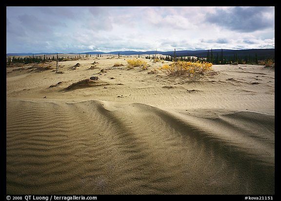 Sand ripples in Arctic dune field. Kobuk Valley National Park (color)